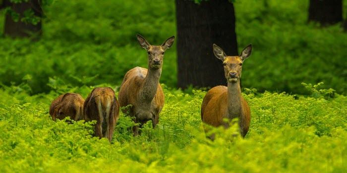 Wildlife & Countryside